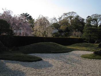 12-sakura-kyoto254.JPG