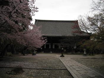 12-sakura-kyoto26.JPG
