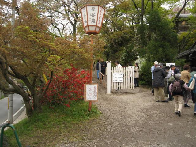 12-sakura-kyoto284.JPG