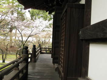12-sakura-kyoto29.JPG