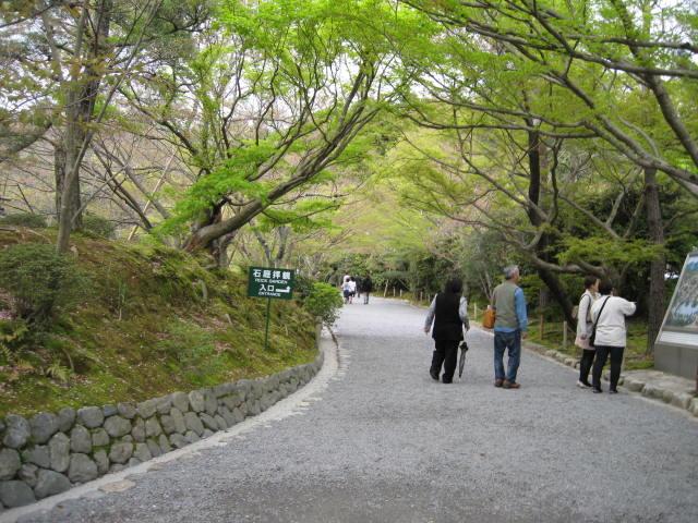 12-sakura-kyoto335.JPG