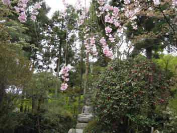 12-sakura-kyoto341.JPG