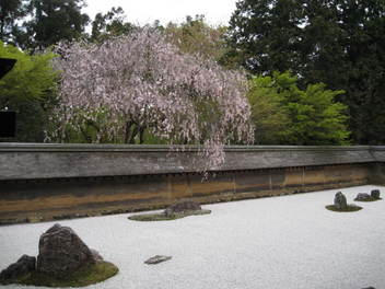 12-sakura-kyoto344.JPG