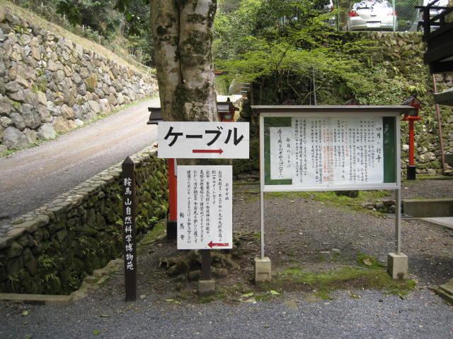 12-sakura-kyoto415.JPG