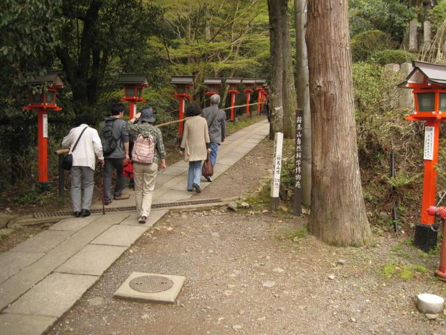 12-sakura-kyoto419.JPG