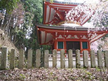 12-sakura-kyoto420.JPG