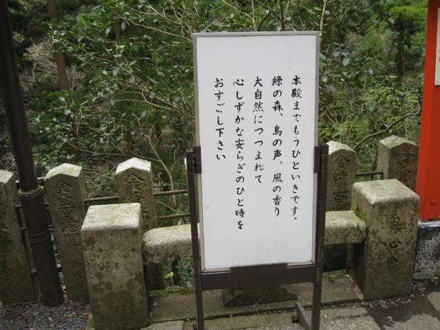 12-sakura-kyoto425.JPG