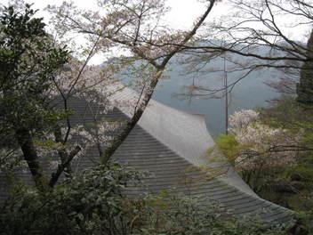 12-sakura-kyoto431.JPG