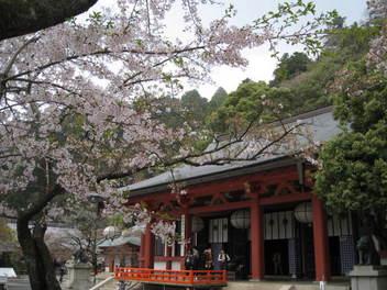 12-sakura-kyoto435.JPG