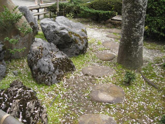 12-sakura-kyoto441.JPG