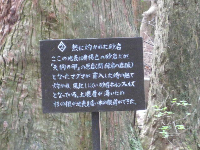 12-sakura-kyoto461.JPG