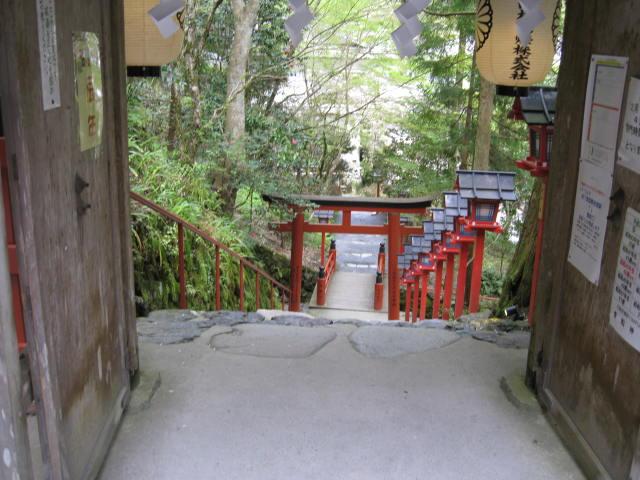 12-sakura-kyoto511.JPG
