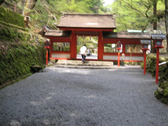 12-sakura-kyoto529.JPG