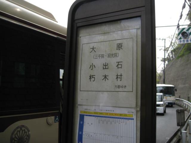 12-sakura-kyoto543.JPG