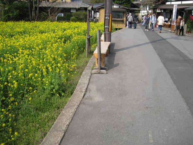 12-sakura-kyoto549.JPG