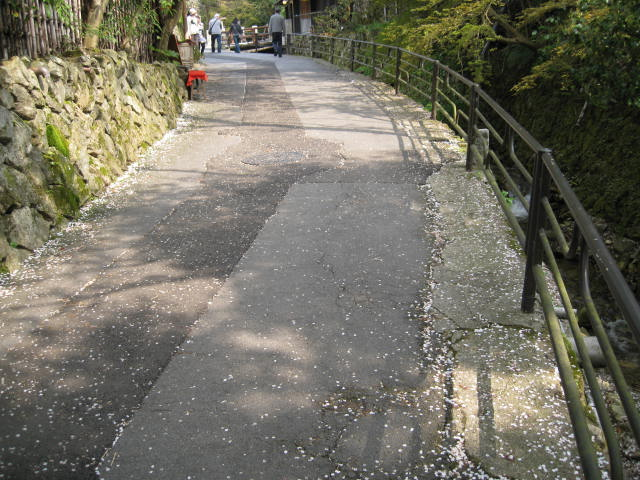 12-sakura-kyoto554.JPG