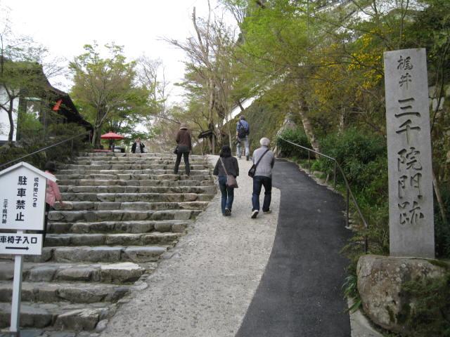 12-sakura-kyoto562.JPG