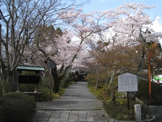 12-sakura-kyoto81.JPG