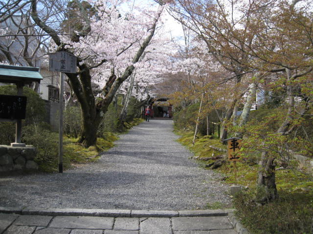 12-sakura-kyoto83.JPG