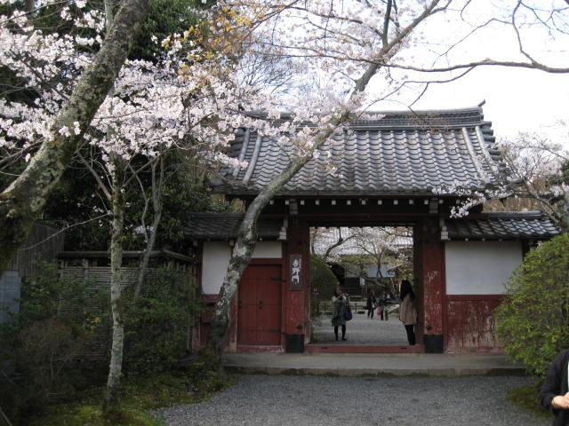 12-sakura-kyoto85.JPG