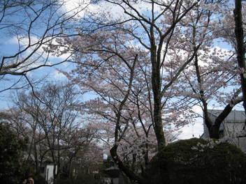 12-sakura-kyoto86.JPG