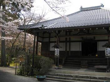 12-sakura-kyoto87.JPG