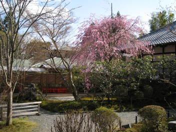 12-sakura-kyoto98.JPG