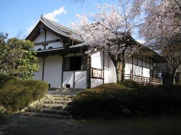 12-sakura-kyoto99.JPG
