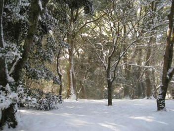 12-snow-kyoto21.JPG