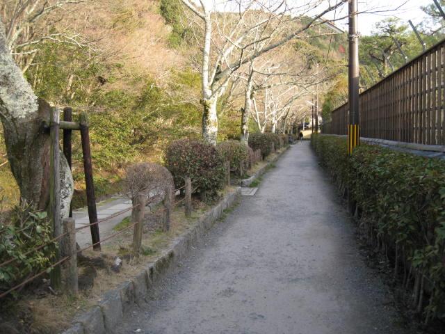 12-ume-kyoto82.JPG