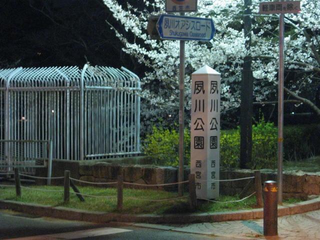 12-yozakura-syukugawa1.JPG