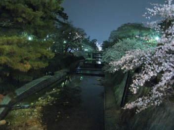 12-yozakura-syukugawa5.JPG