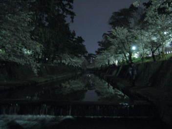 12-yozakura-syukugawa8.JPG