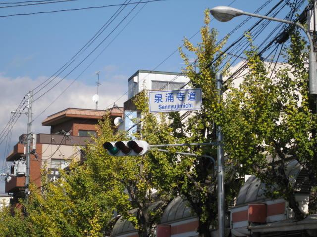 13-koyo-kyoto3.JPG