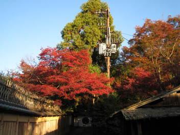 13-koyo-kyoto86.JPG