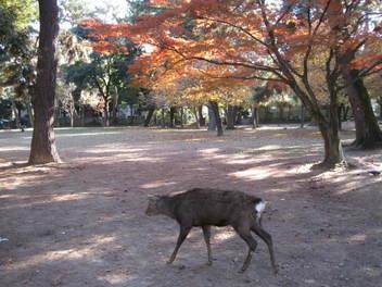 13-koyo-nara11.JPG