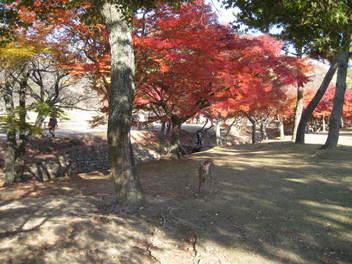 13-koyo-nara18.JPG