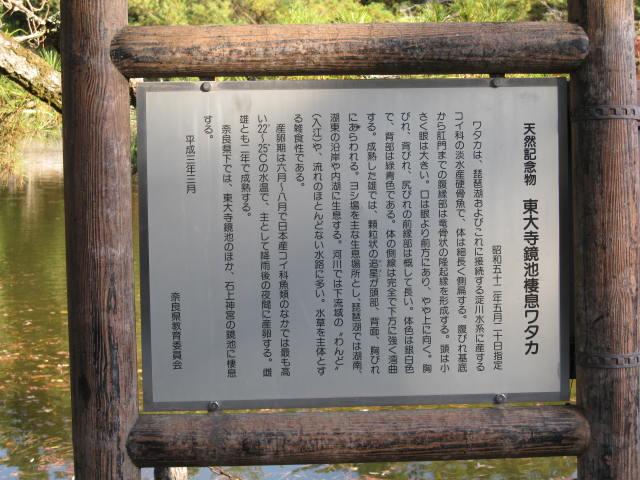 13-koyo-nara25.JPG
