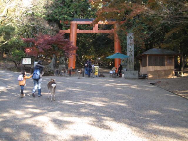 13-koyo-nara28.JPG