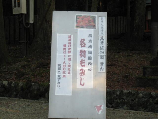 13-koyo-nara55.JPG