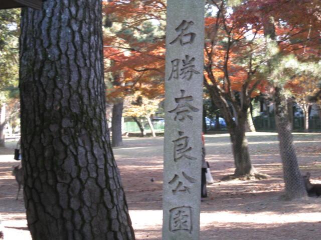 13-koyo-nara8.JPG