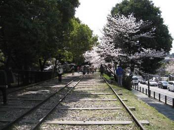 13-sakura-kyoto12.JPG