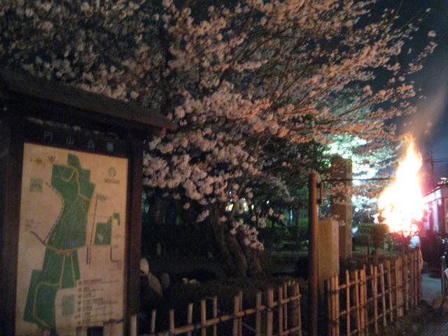 13-sakura-kyoto138.JPG