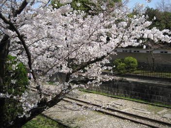 13-sakura-kyoto14.JPG