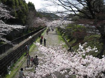 13-sakura-kyoto15.JPG