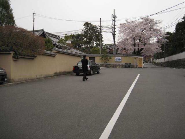 13-sakura-kyoto175.JPG