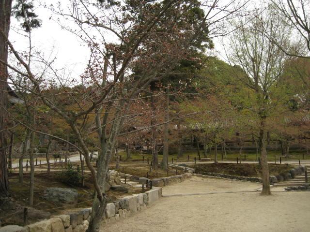 13-sakura-kyoto184.JPG