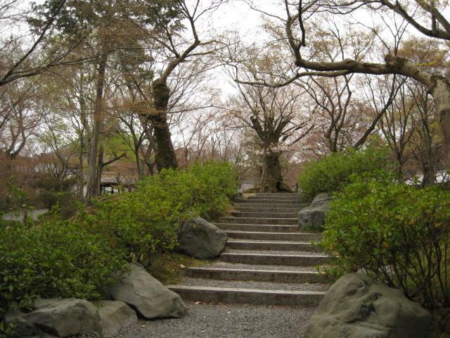 13-sakura-kyoto186.JPG