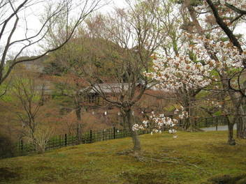 13-sakura-kyoto187.JPG