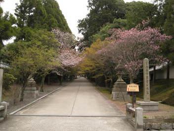 13-sakura-kyoto189.JPG